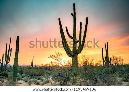 Spectacular Arizona Desert Sunset: Colorful Sky and Cacti/ Saguaros in Foreground  - Saguaro National Park, Arizona, USA