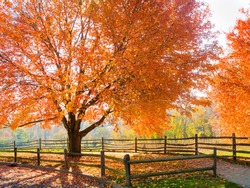 Spectacular Autumn colors in Holmdel Park in New Jersey.