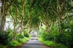 Spectacular Dark Hedges in County Antrim, Northern Ireland on cloudy foggy day. Avenue of beech trees along Bregagh Road between Armoy and Stranocum. Empty road without tourists