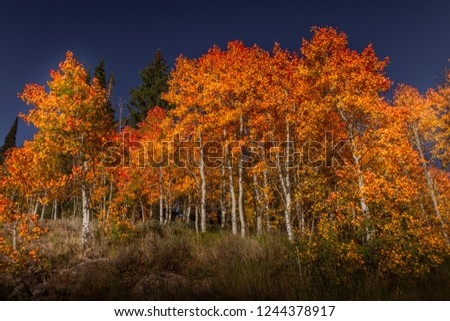 Spectacular saturated view of autumn leaf color at dusk in Southern Utah. #1244378917