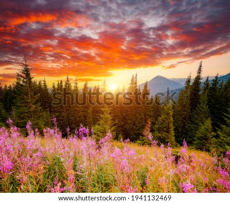 Spectacular sunset in the valley of the mountains. Location place Carpathian mountains, Ukraine, Europe. Vibrant photo wallpaper. Picturesque nature photography. Discover the beauty of earth. Foto d'archivio ©