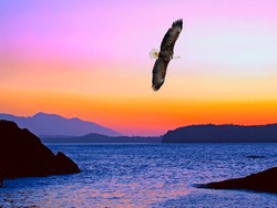 Spectacular Sunset on the Pacific Ocean with a Bald Eagle soaring in the sky.