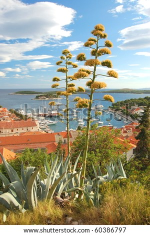 Spectacular view of the Old Town of Hvar, Croatia