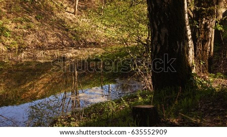 Specular reflection of coastal trees in water.