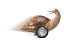 Speedy garden snail with wheel and motion blur isolated on white background. Speed conceptual image.