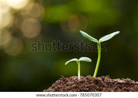Speing bud with bright green background outdoor shoot