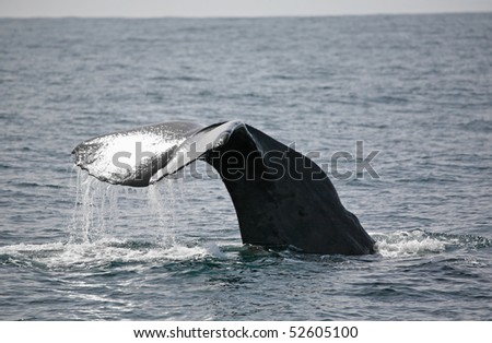 sperm whale - stock photo