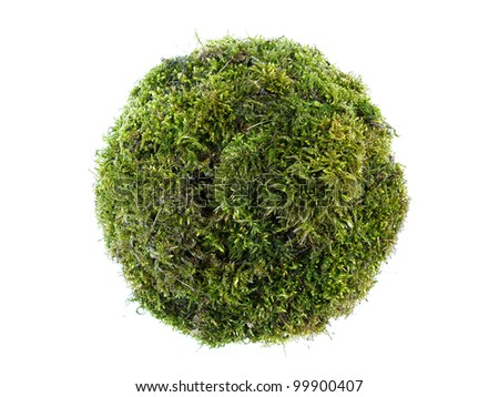 Sphere formed from moss isolated on white
