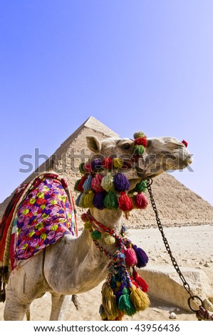 Sphinx and Pyramid of Cheops, Cairo Egypt, Camel