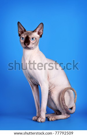 Sphinx on blue background