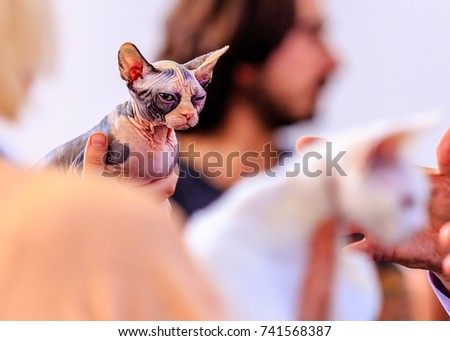 sphynx cat look suspicious whith a white cat in the foreground.