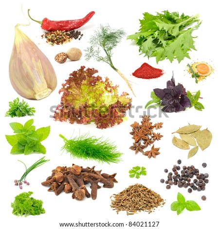 Spice & Herb Set - Garlic, Chili, Dill, Mizuna, Nutmeg, Lettuce, Parsley, Tandoori Masala, Basil, Soup Seasoning, Mint, Fennel, Anise, Bay Leaf, Chives, Cloves, Celery, Juniper Berries, Caraway Seeds