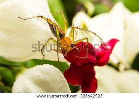Spider  #328642523