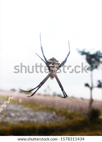 Spider, also called a spider, is a kind of segmented-book animals (arthropods) with two body segments, four pairs of legs, no wings and do not have a mouth chewers.