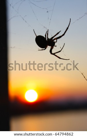 spider and sunset in Kiev #64794862