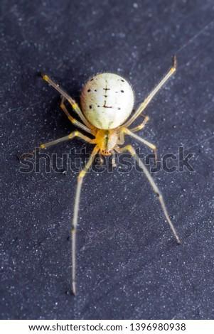 Spider Arachnid on Dark Background Macro #1396980938