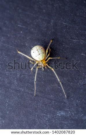 Spider Arachnid on Dark Background Macro #1402087820
