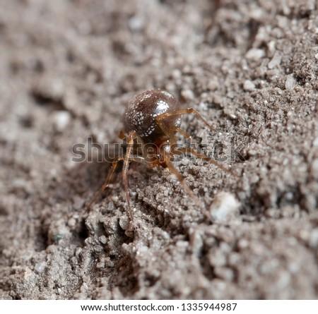 Spider arthropod invertebrate #1335944987