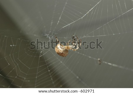 Spider attacking a ant in its web