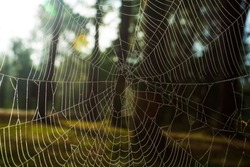 Spider autumn forest ,Spider web with dew drops ,Drop, Water, Czech Republic, Spider Web, Close-up,Netherlands,  Web, Broom, Tree