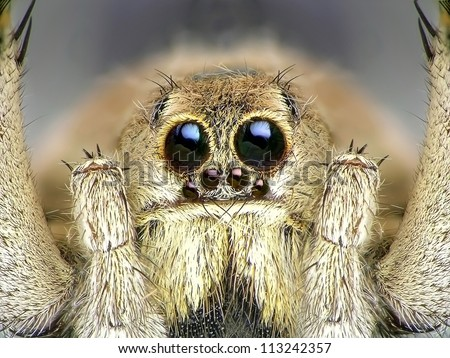 Spider. Close up. #113242357
