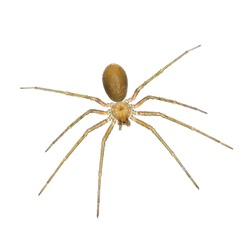 Spider. Close up. Isolated on a white background