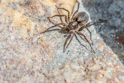 Spider closeup sitting on the stone in north Norway - with copy space