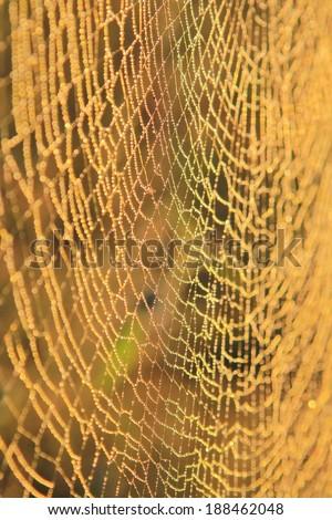 Spider Cobweb - Nature Background of intricate design - Golden Orb Web Weaver Spider net