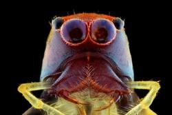 Spider extreme closeup, macro photography