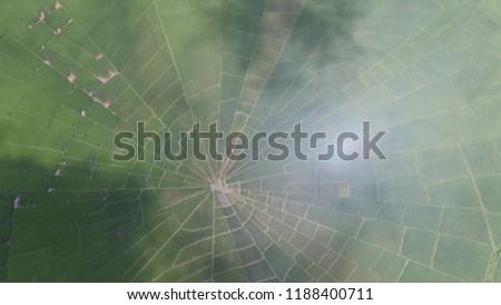 Spider field Indonesia #1188400711