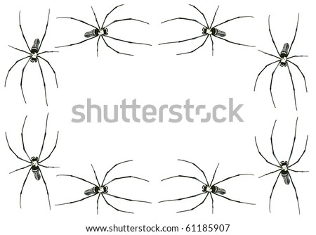Spider frame isolated on white + clipping path