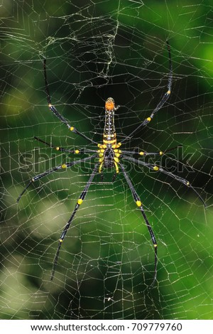 Spider garden-spider (Araneus) type of spider araneomorphae from the spider family Orb-web (Araneidae)