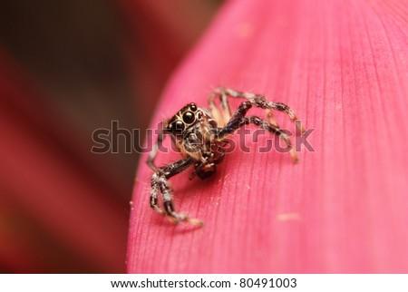 Spider holding prey