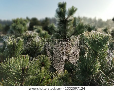 Spider in a spider web #1332097124