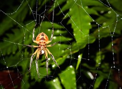 Spider in its spider's web, waiting for its prey. Photo taken in the jungle of Costa Rica, Barbilla National Park.