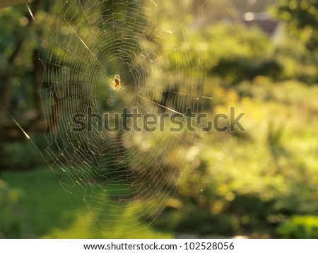 Spider in spiderweb - stock photo