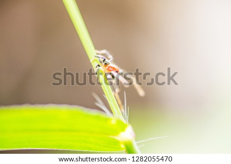 Spider in the nature - macro picture