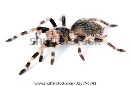 spider isolated on white...