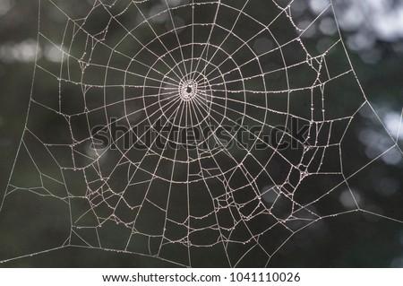 spider network, forest #1041110026