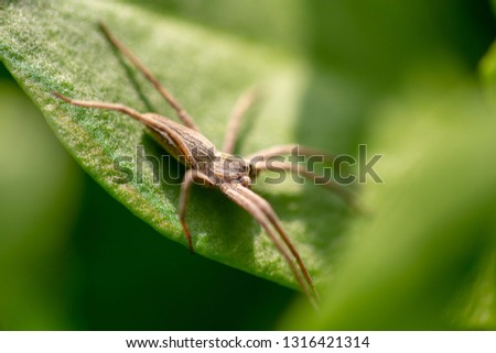 Spider on a green leaf of a plant . #1316421314