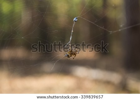 spider on a web in the forest closeup #339839657