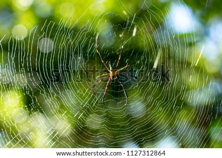 Spider on cobweb in gareden.