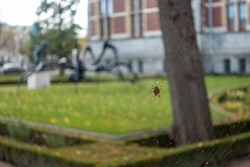 Spider on its web in front of  big spider sculpture in the Rijksmuseum Gardens