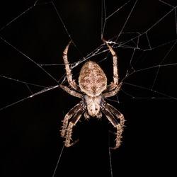 Spider on spider web at night