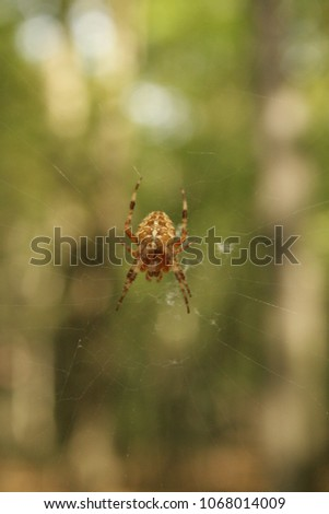 Stock Photo Spider on the spider web