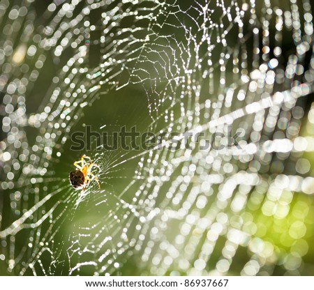 Spider on the web. #86937667