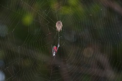 spider on the web with its prey
