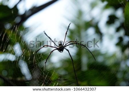 Stock Photo spider on web