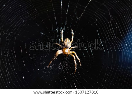 Spider on web, macro world, macro animals
