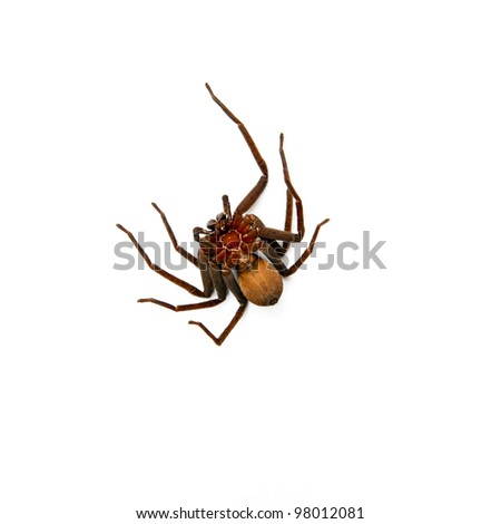Spider on white background